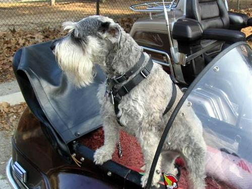 Sidecars are a dog's best friend…safe, secure, sniffable…